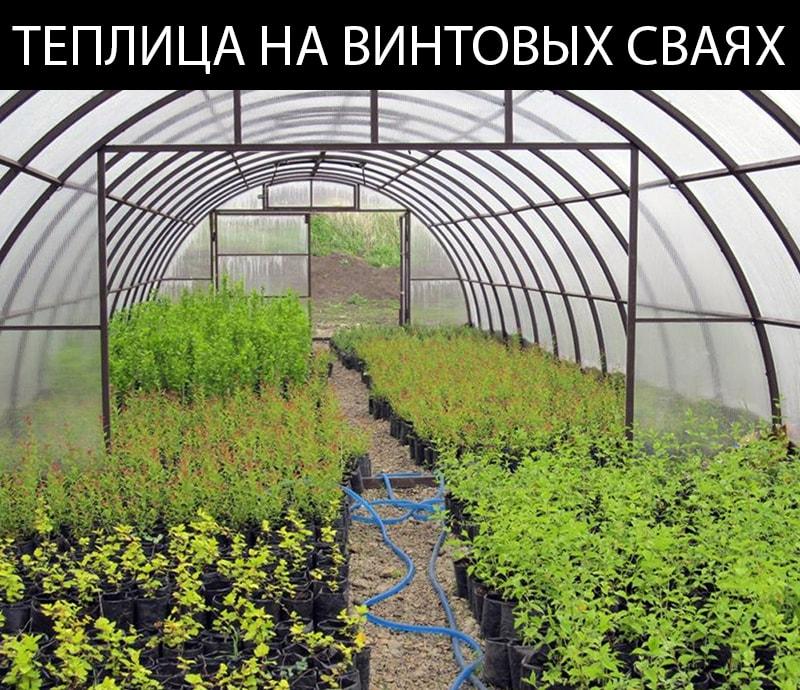 Теплица на винтовых сваях в Томске служит своему владельцу верой и правдой много лет подряд.
